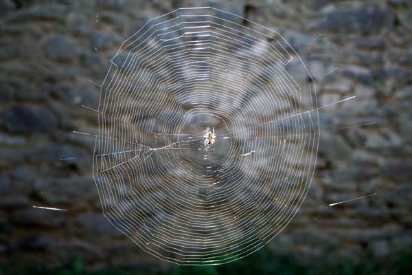 Web4_1